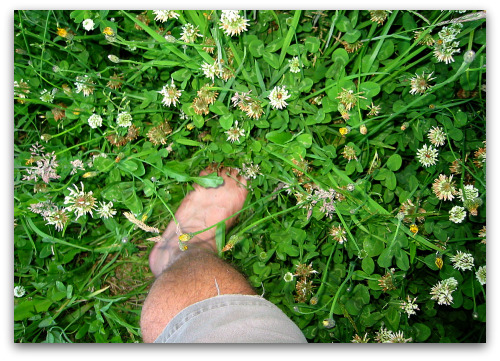 foot in tall clover About Tom and Tall Clover Farm