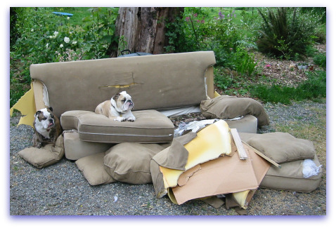 Boz and Gracie Mourn Their Sofa's Demise