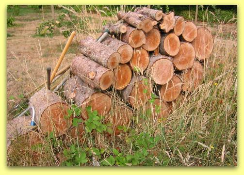 woodstack of fir rounds