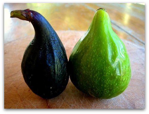 ripe figs: negronne and dessert king