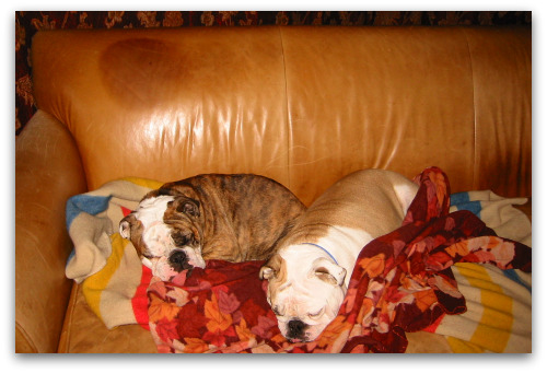 Boz_Gracie_couch