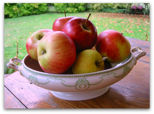 blog bowl of apples1 Great Apple Trees for Seattle