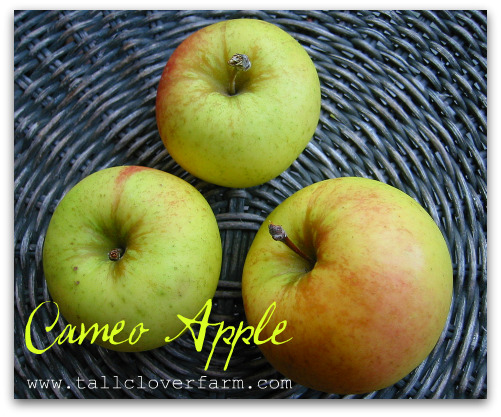 blog cameo apples Great Apple Trees for Seattle