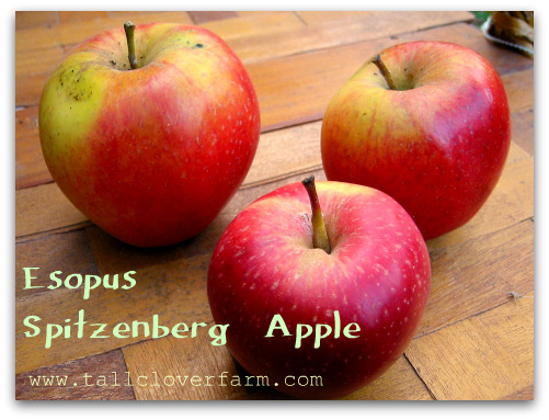blog esopus spitzenberg apple Great Apple Trees for Seattle