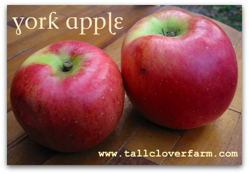 blog york apple Great Apple Trees for Seattle