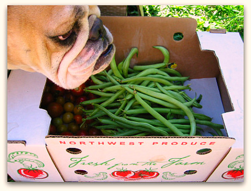 blog beans boz Fortex: Best Mess of Green Beans Growing