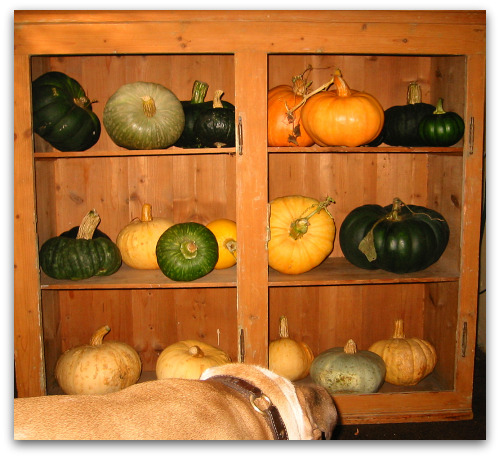 2009 10 06 blog pumpkin shelf Sweet Meat Squash: Stores Well, Tastes Great