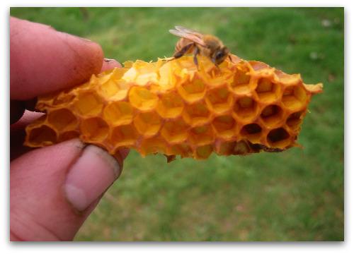 2010_03_21_blog_bees_pumpkin 009