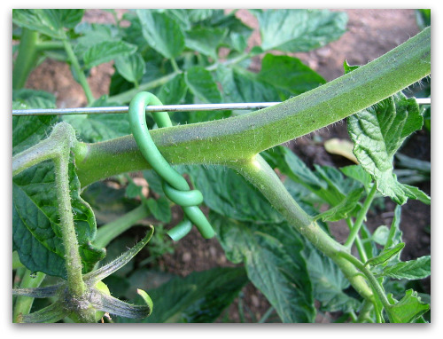 tomato support foam twist tie How to Make a Tomato Trellis: A Cagey Alternative