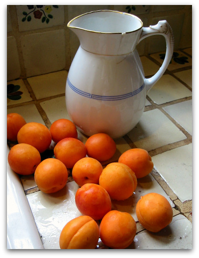 fresh apricots pitcher Apricot Preserves Recipe: Jam Making as Alchemy