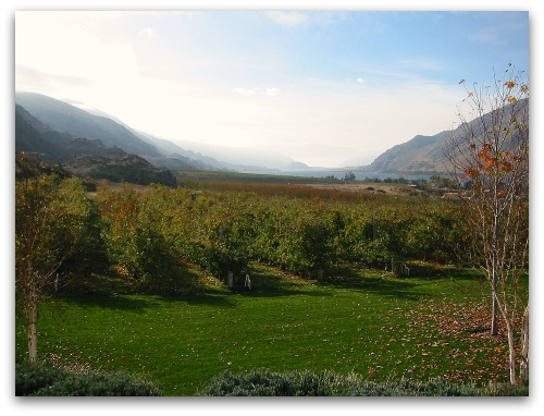 Apple orchard along the Columbia River