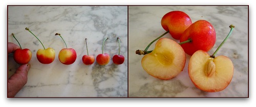 Rainier Cherries, commercial and homegrown