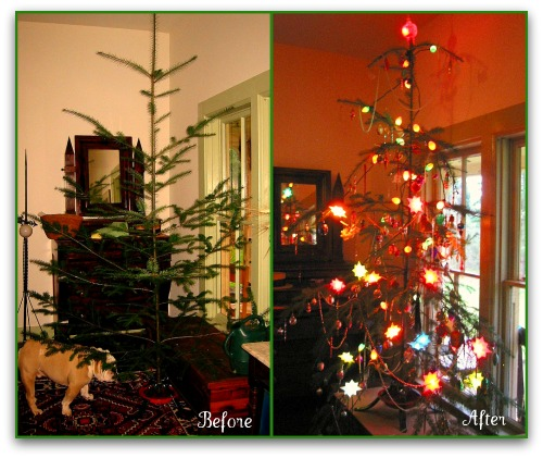 Charley Brown Christmas Tree: Happiness Is A Charlie Brown Christmas Tree