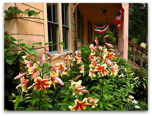 lilies at tall clover farm Lilies: How to Make Lily Flowers Last Longer