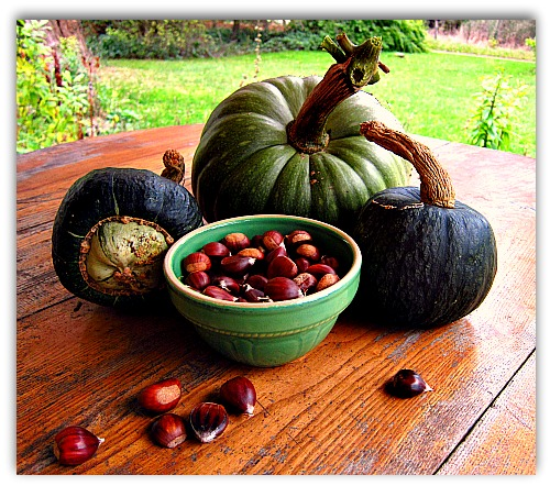 chestnuts and pumpkins Spreading the Chestnut Love