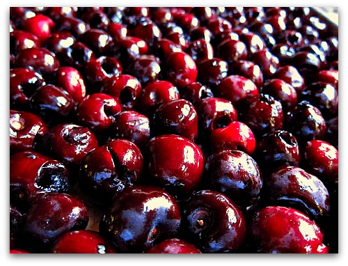 about to be pickled cherries on tray Pickled Sweet Cherries...Who Would Have Thunk?