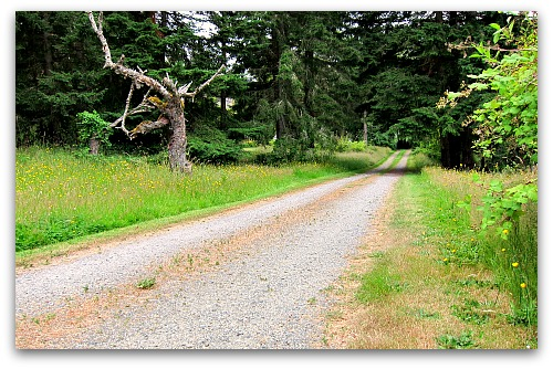 gravel country driveway Lawn to Meadow: Gardening on the Wild Side