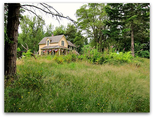 tall clover farmhouse Lawn to Meadow: Gardening on the Wild Side