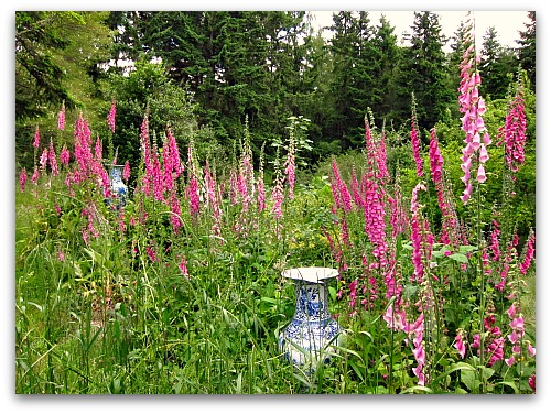 wild garden foxgloves Jardinieres Lawn to Meadow: Gardening on the Wild Side
